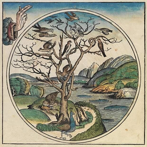 Шесть дней творения мира из Нюрнбергской хроники (1493 г)