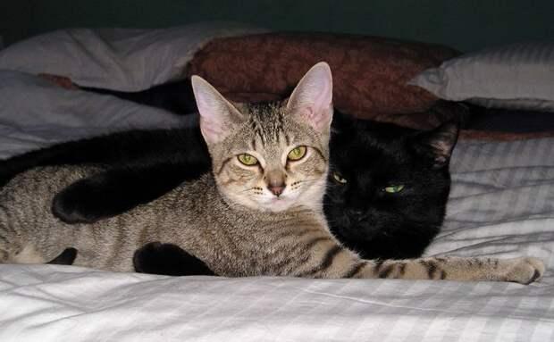 Любителям котов посвящается! )))