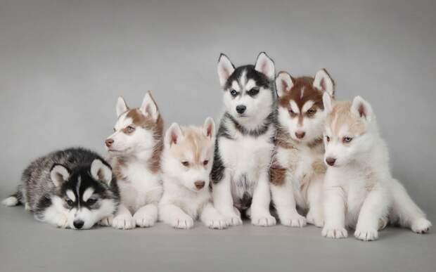 Много щенков фото