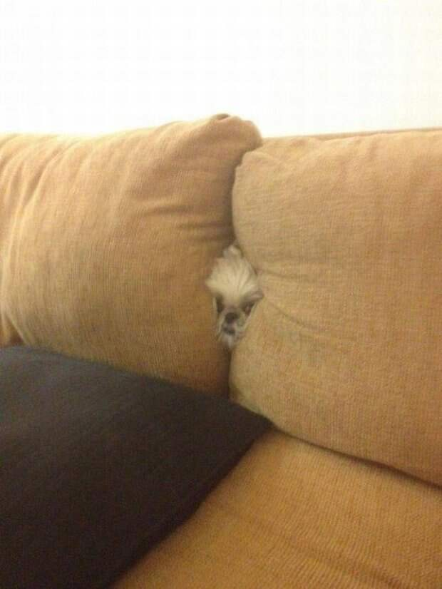 Собачки которые очень хотели спрятаться-15