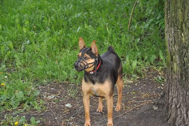 Ребенка из Марьиной рощи в парке укусила собака