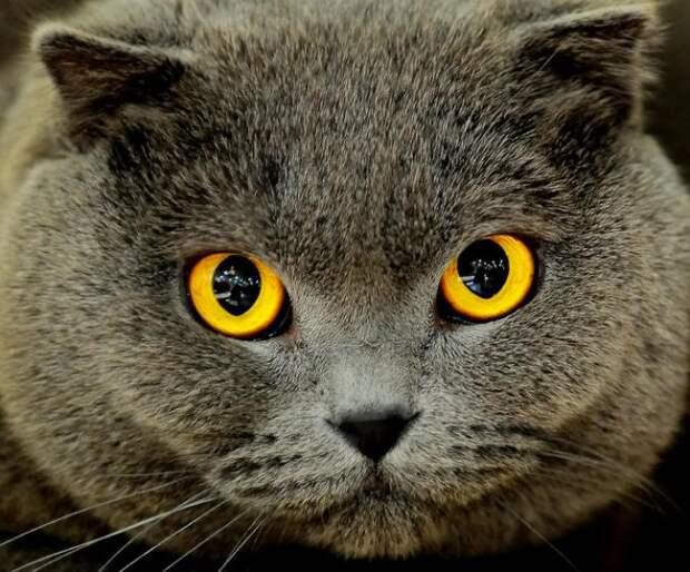 Эти забавные кошки. Обсуждение на LiveInternet - Российский Сервис Онлайн-Дневников