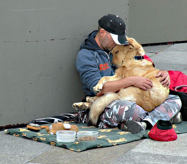 3. Преданность бездомный, любовь, собака