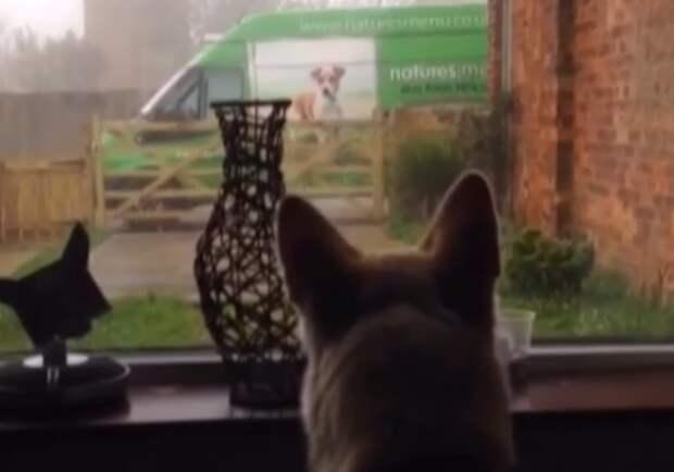 Девушка услышала громкий лай пса в гостиной - его противник был за окном видео, прикол, смешно, собака, фото