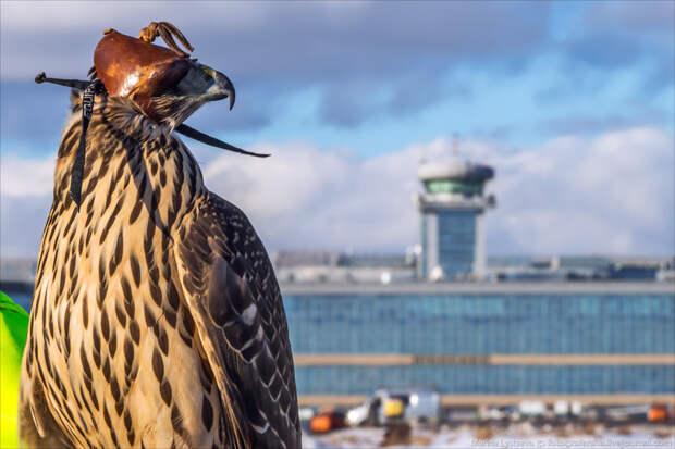 Как устроена орнитологическая служба в Домодедово