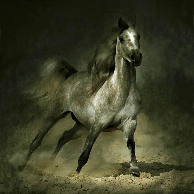 15. По легенде бедуинов, Аллах создал арабскую лошадь из четырех ветров – духа Севера, силы Юга, ско