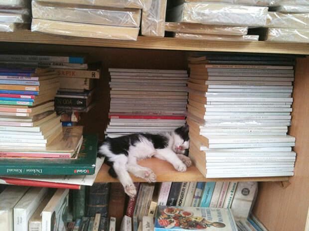 28. Сон в библиотеке котенок, сон