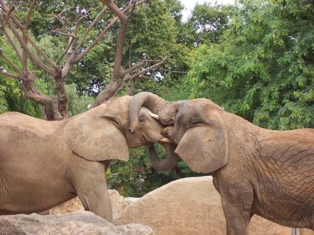 слоны никогда ничего не забывают