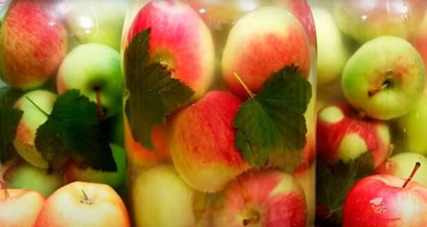 Как заготовить вкусные моченые яблоки в банках