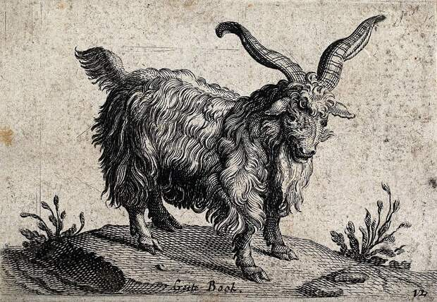 A_billy_goat_with_long_horns._Wood_engraving._Wellcome_V0021554.jpg