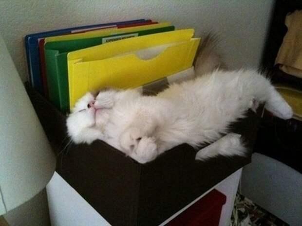Коты, познавшие науку сна дрыхнут, коты