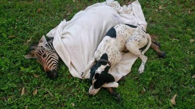 Невероятные животные  - истинная дружба!