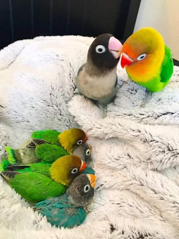 Совсем как люди! Трогательная история птичьей любви