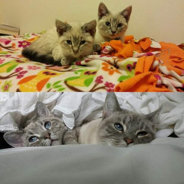 """До и после. Фото животных, которые обрели """"свой"""" дом до и после, животные, новый дом, подборка историй"""