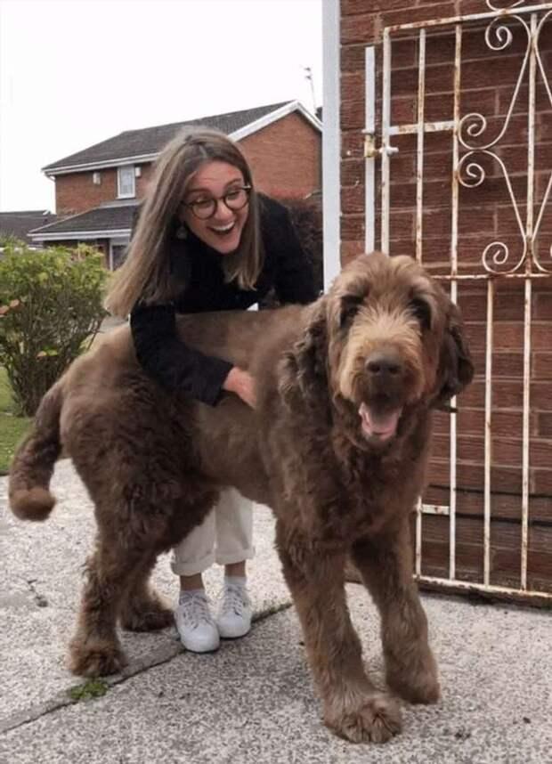 20+ человек, которые заводили крупную собаку, а вырос маленький медведь