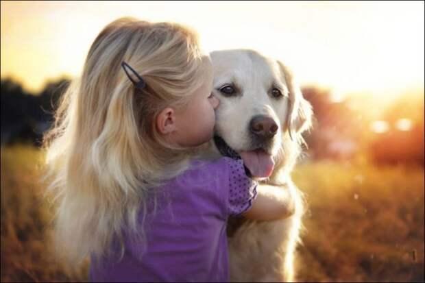 Красивые фотографии о дружбе собак