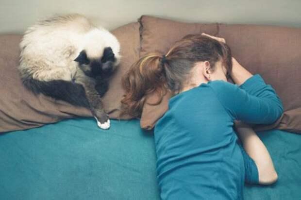 Животные в спальне