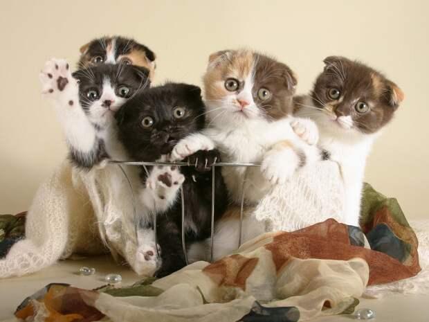 Фото самых красивых кошек
