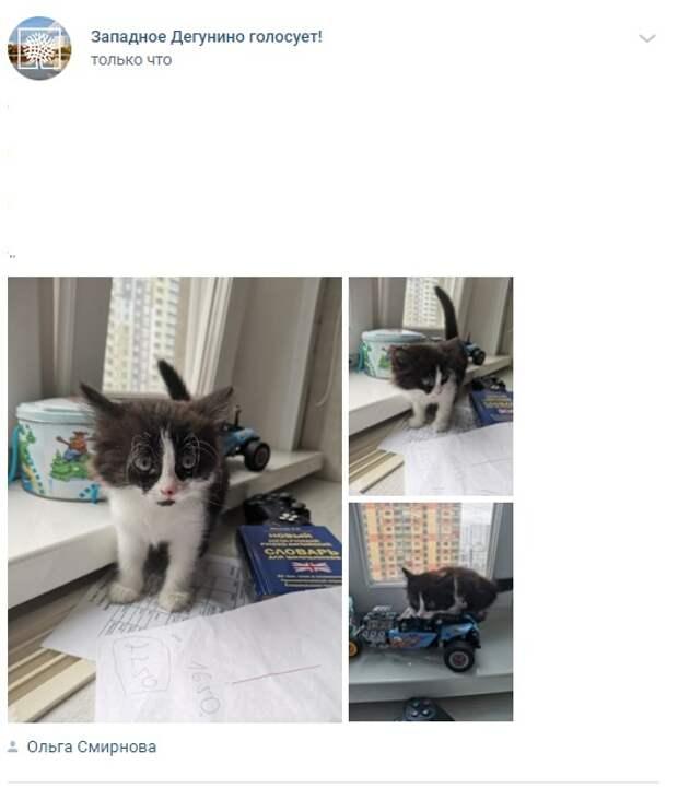 Фото дня: на Базовской котенок ждет своего хозяина