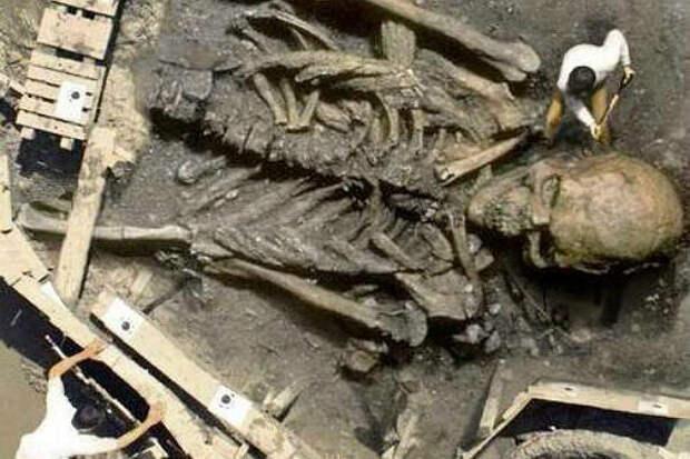 Огромный скелет