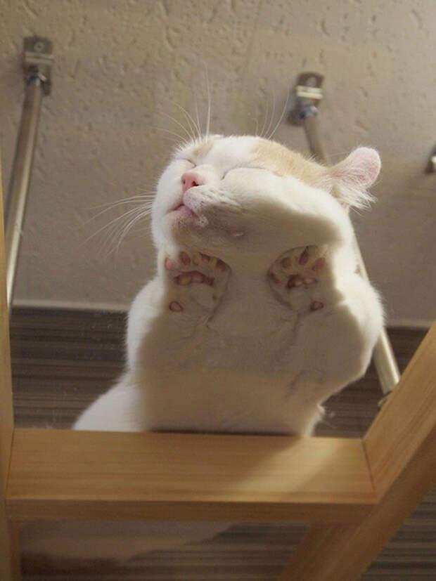11. Сон на стеклянном столе котенок, сон