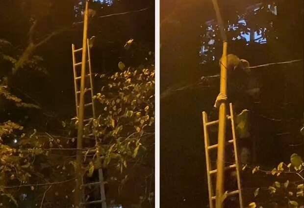 Котёнка с фонарного столба спустили алматинские спасатели