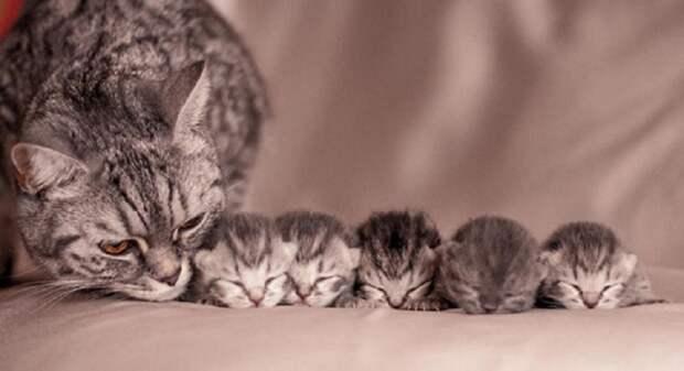 Кошка с новорождёнными котятами.