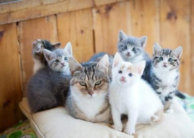 Кошки с пополнением — идиллия, достойная восхищения!