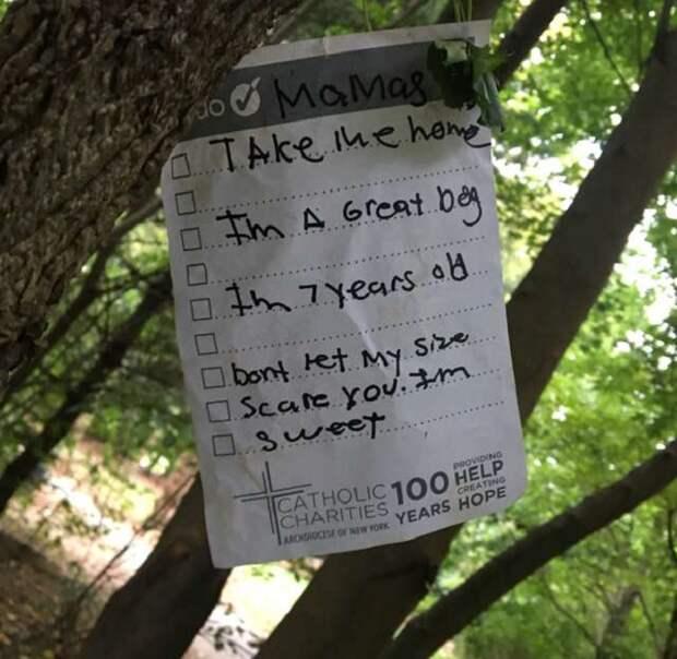 Записка на дереве