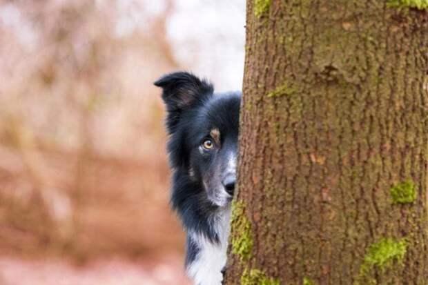 Третье место в категории «Я люблю собак» великобритания, животные, интересное, конкурс, собака, собаки