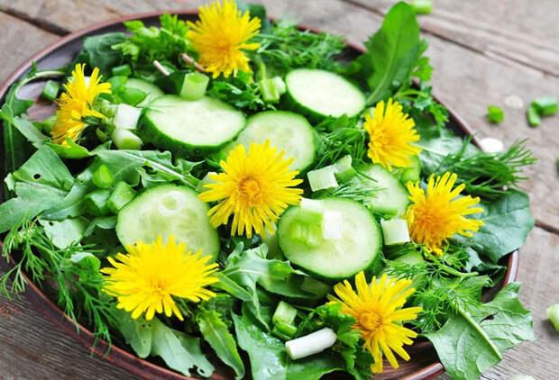 Растения с поля и леса, которые повара добавляют в еду