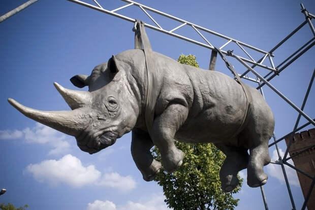 Висящий носорог, Потсдам, Германия, Европа