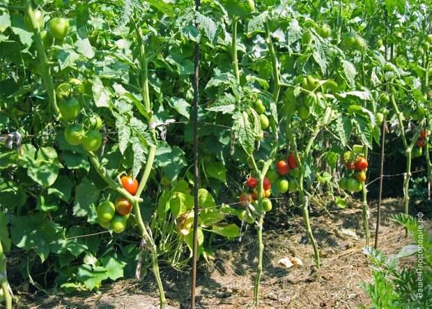 природное земледелие
