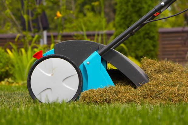 Многие дачники используют скошенную газонную траву для мульчирования