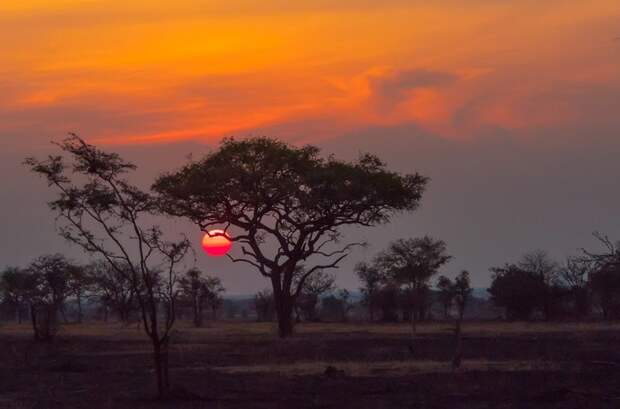 6. Национальный парк Серенгети (Танзания). Славится богатейшим животным миром заповедник, заповедники, национальные парки, национальный парк, парки, познавательно, страны мира, туристу на заметку