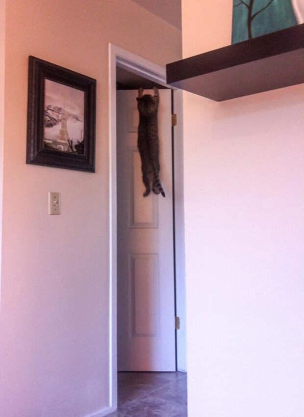 6. То ли упаду, то ли дверь захлопнется… животные, кот, юмор