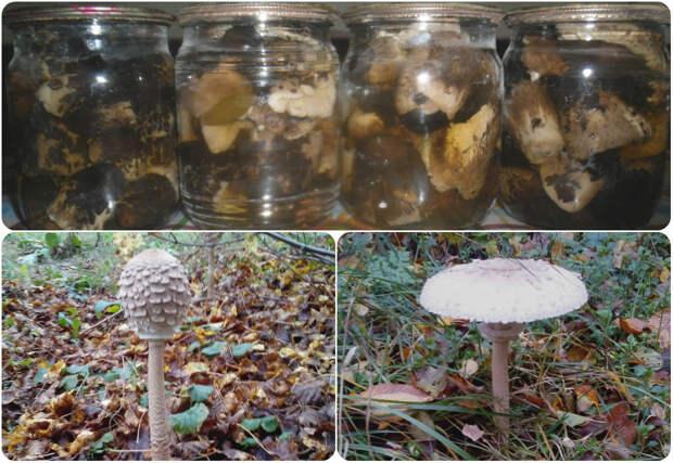 Маринованные грибы «Зонтики»