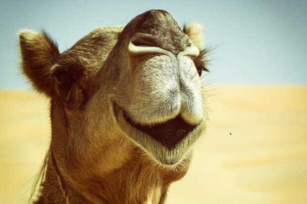 37 фотографий животных, которые вызывают улыбку - 11_2
