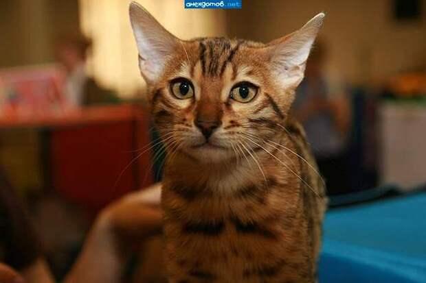 Эмоциональные котики пожнимут вам настроение!