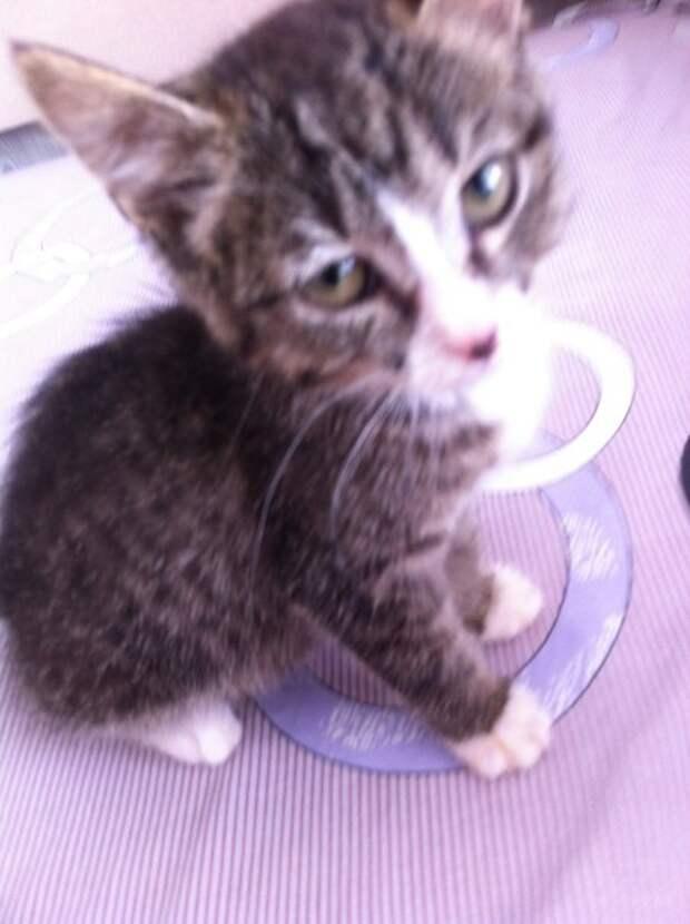 История котенка Софы