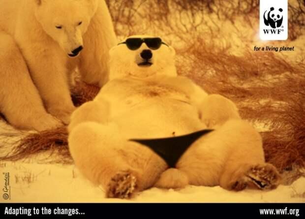 Зачем белому медведю трусы