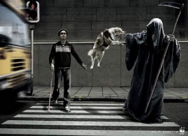 WWF: спаси собаку - спаси себя!