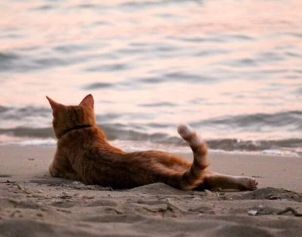 кот кошка Кошкин море коты кошки