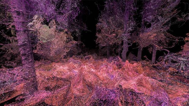 Виртуальная реальность: как видят животные