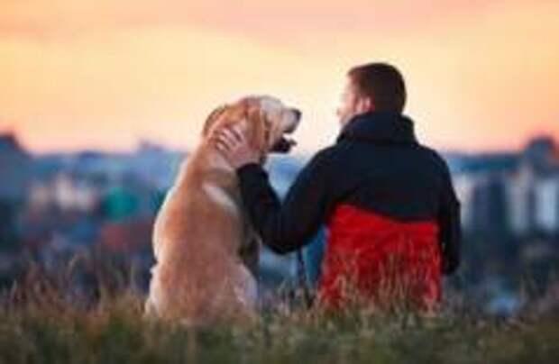 Собаки могут испытывать стресс вместе с хозяевами, выяснили шведские ученые