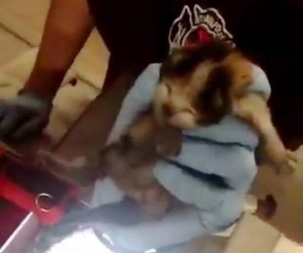 Пожарные Индианаполиса обнаружили в двигателе своей машины крошечных котят