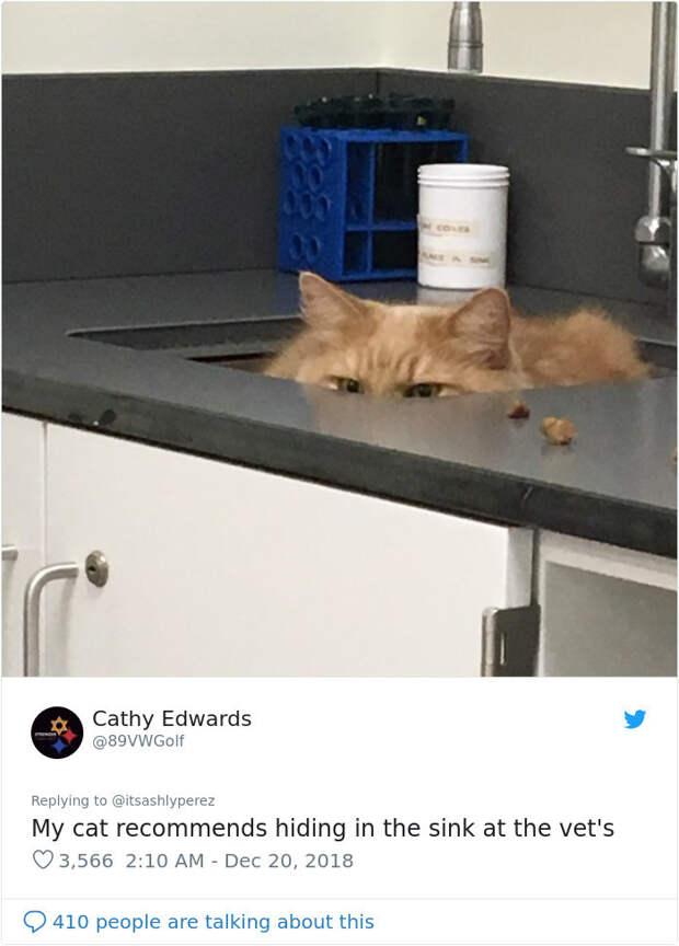 Люди делятся фотографиями, как их коты прячутся от ветеринаров в приемных кабинетах