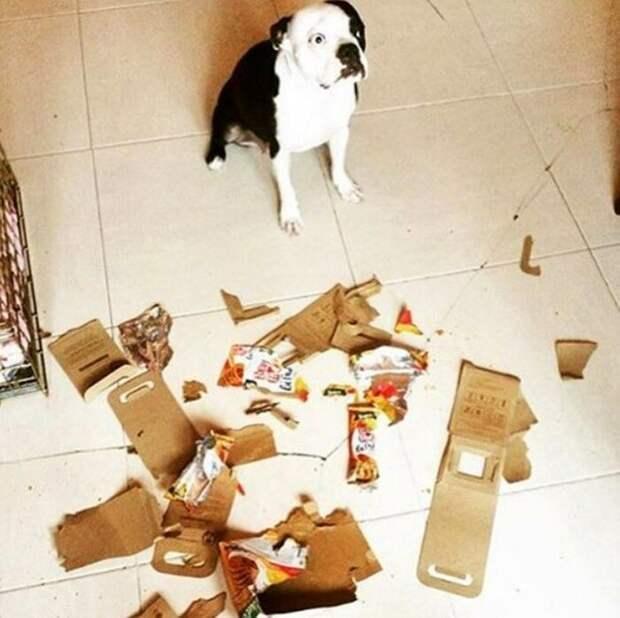 17. Особенно собаки подойдут тем, кто любит пазлы животные, забавно, милота, подборка, собака, умора, юмор
