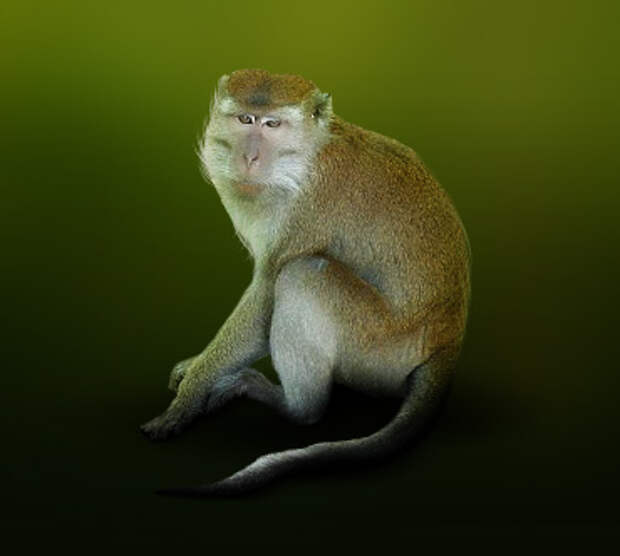http://www.theanimalworld.ru/img/encycl/animals/big/makaka.jpg