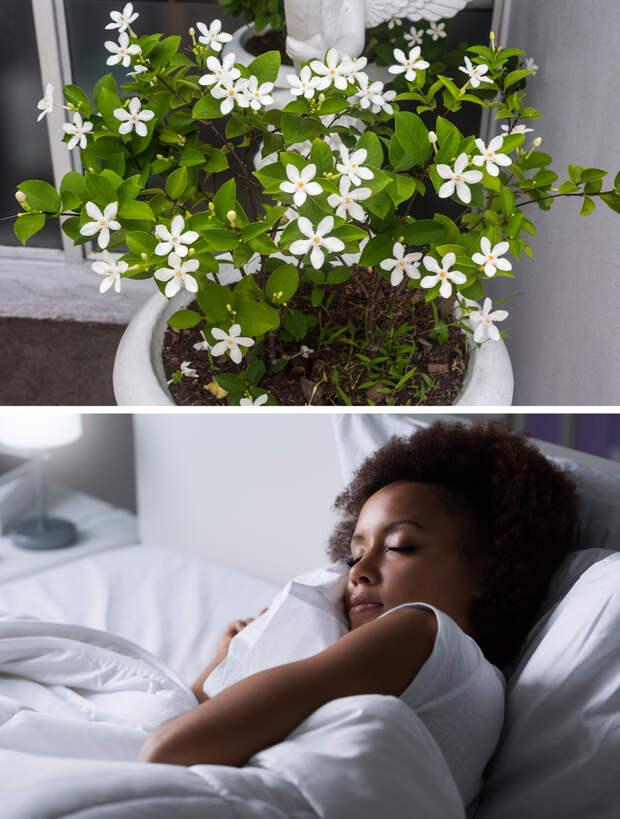 15 комнатных растений, полезных для здоровья